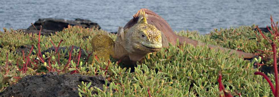 Information about the Galapagos Islands